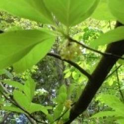 画像1: 9/27 白神アロマリフレッシュセミナー「アロマの活用で健康で長生き」
